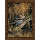 Backwaters Green-winged Teal Ducks Framed Canvas Print
