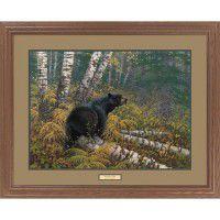 Northwoods Black Bear Framed Print