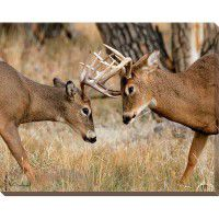 Fighting Bucks - Whitetail Wrapped Canvas Art