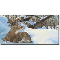 Next Door Neighbors - Deer Wrapped Canvas